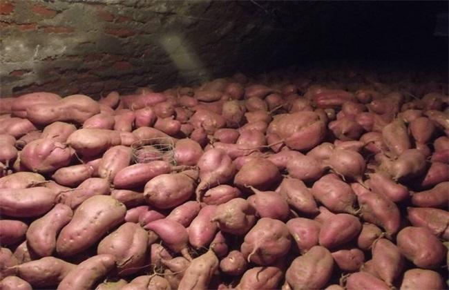 防止 红薯烂窖 诀窍