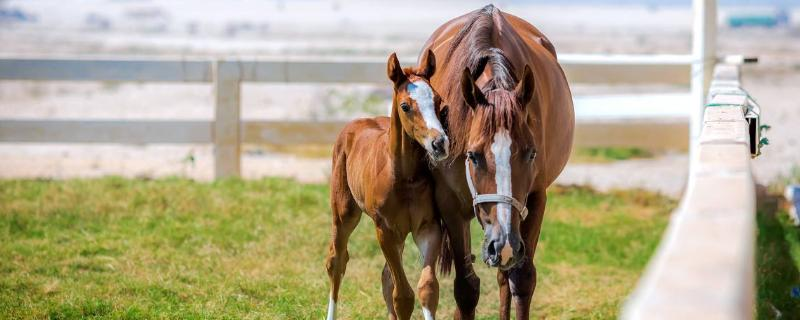 马繁殖方式,马与驴是怎样配种的